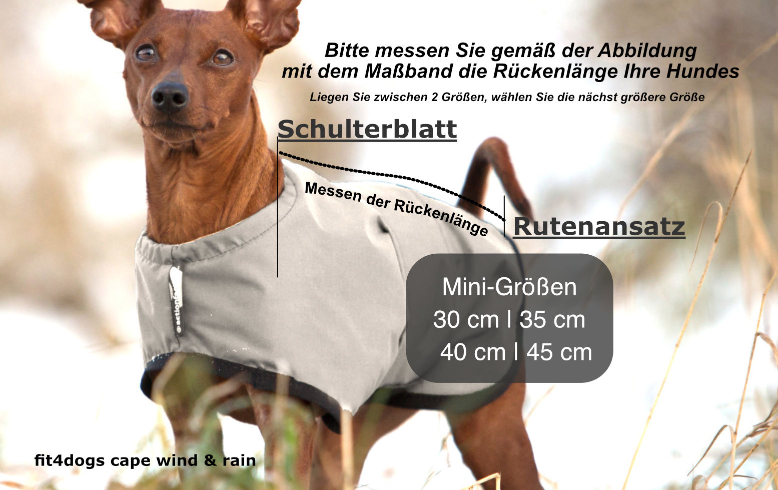 Pinscher-cape-wind-rain-sand-Grossenfindung